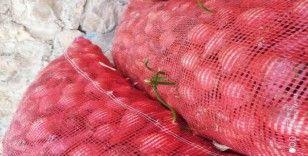 Ucuz diye satmadıkları soğanlar filizlendi