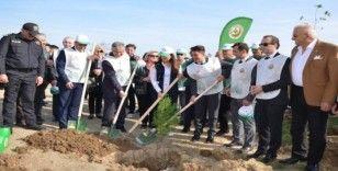 Fatsa'da ağaçlandırma seferberliği