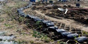 Giresun'da 115 bin fidan toprakla buluştu