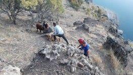 Kayalıklarda mahsur kalan keçiler, 4 saatte kurtarıldı