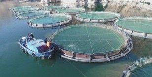 Türkiye'de en çok Elazığ'da üretilen alabalık 18 bin tona, somon bin tona yükseldi