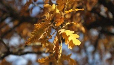 Hekimdağ sonbahar renklerine büründü