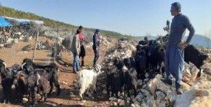 Çaldıkları koyunları ucuz fiyata satmışlar