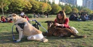 Evinde 10 hayvan besleyen kadın, veteriner hekim olmak için 3. üniversiteyi okuyor