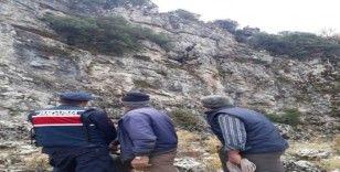 Mahsur kalan keçiler AFAD tarafından kurtarıldı