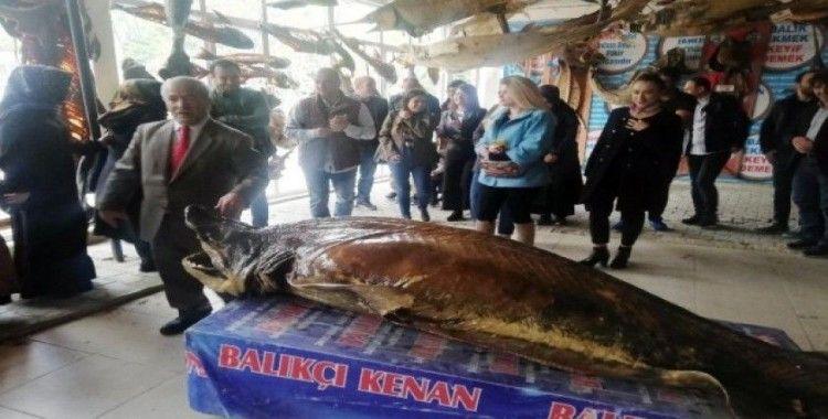 Öğretmenlere, Balon balığı tehlikesine karşı eğitim