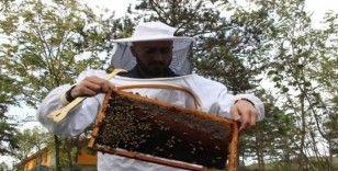 (Özel) Okul harçlıkları arılardan