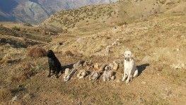 Bitlis'te terör örgütüne ait 8 adet eyp ele geçirildi