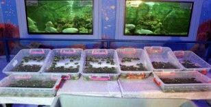 Gümrük kapısında ele geçirilen su kaplumbağaları Gaziantep'te