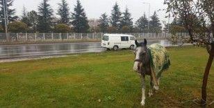 Hayvanseverin dikkati atı ölümden kurtardı