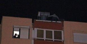 12 katlı apartmanın çatısından aşağı sarkan genç kadını film izler gibi izlediler