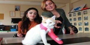 Öğretmen ve öğrencilerin duyarlılığı engelli kediyi sağlığına kavuşturdu