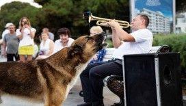Ölen sahibinin dönmesini 9 yıl bekleyen köpek: Kırım'ın Haçiko'su