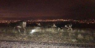 Kayıp inekler jandarma tarafından bulunup sahibine teslim edildi