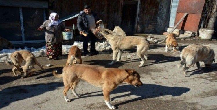 Sokak hayvanlarına her gün ekmek ve yem veriyorlar