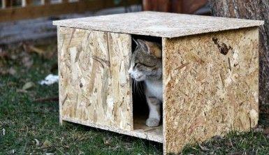 Kediler üşümesin diye kedi evleri yapıp tüm şehri donattılar