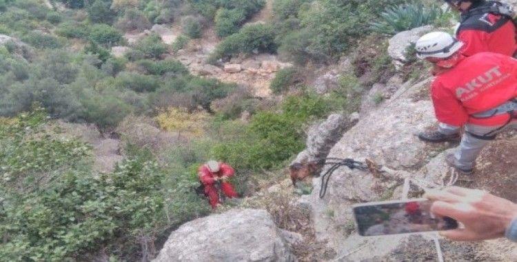 Kayalıklarda mahsur kalan keçi AKUT ekiplerince kurtarıldı
