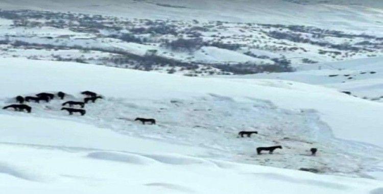 Hakkari'de at sürüsü ölüme terk edildi