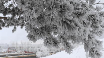 Kırağı tutan ağaçlardan kar yağdırdılar
