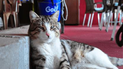 Hayatını kurtardığı kedi 'Muzo' işletmesinin maskotu oldu