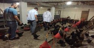 Kocaeli'de çiftçilere 9 bin gezen tavuk desteği