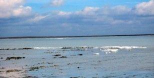 2 ay önce kuruyan göle yağışla birlikte kuşlar akın etti