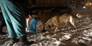 Isparta'da yoğun kar yağışı altında sokak hayvanlarını besleme operasyonu
