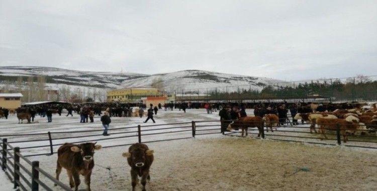 Bayburt Belediyesi canlı hayvan pazarında hizmet vermeye devam ediyor