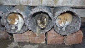 Eski su bidonlarını ve battaniyeleri kedi yuvasına dönüştürdü