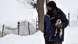 Besicilerin zorlu kış şartlarıyla mücadelesi