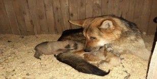 Donmak üzere olan yavru köpekler kurtarıldı