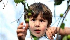 Rize'de erik ve karayemiş ağaçları kış ortasında meyve verdi