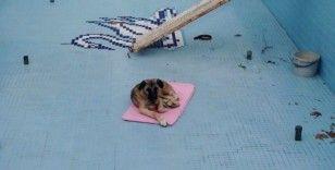 Havuza düşen köpeği işçiler kurtardı