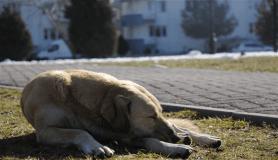 Sokak hayvanları da güneşli havanın tadını çıkardı