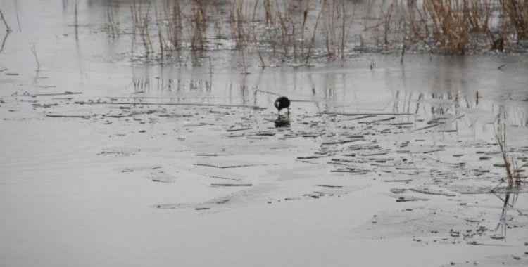 Beyşehir Gölü'nün kıyı kesimleri buz tuttu