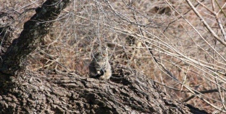 Şelaledeki su seviyesi yükselince iki kedi ağaçta mahsur kaldı