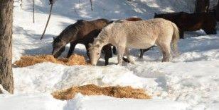 Mersin'de yaban hayvanları için doğaya yem bırakıldı