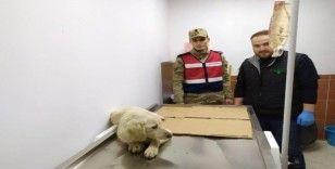 Jandarma yaralı köpeği tedavi ettirdi