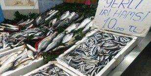 Karadeniz hamsisi 10 liradan tezgahlarda
