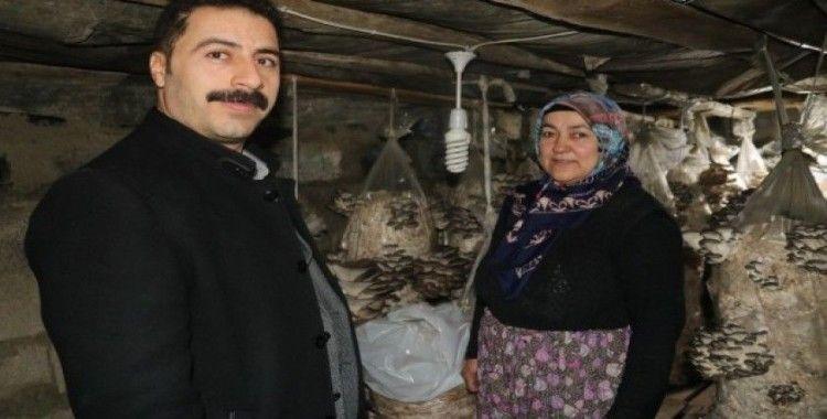 (Özel) Vanlı kadınlar evlerinde mantar üreterek aile bütçelerine katkı sağlıyor