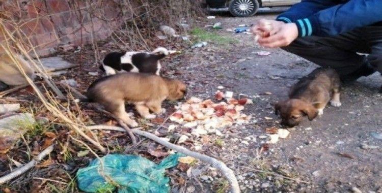 Sakarya'da yavru köpekler çuvala koyularak ölüme terk edildi