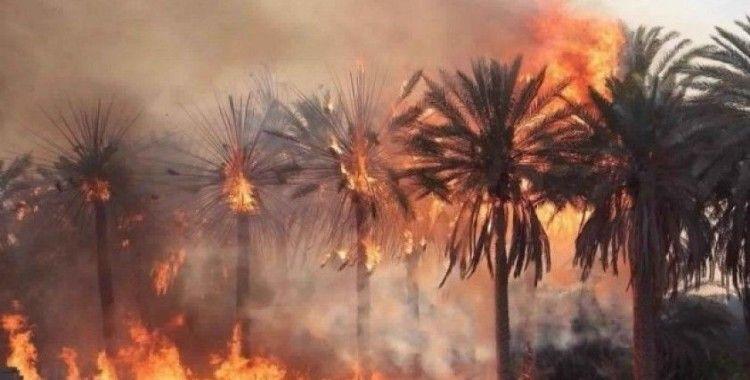 Libya'da 10 bin palmiye ağacı kül oldu