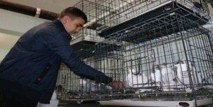 Diyarbakır'da üç bina güvercinler için otele çevrildi