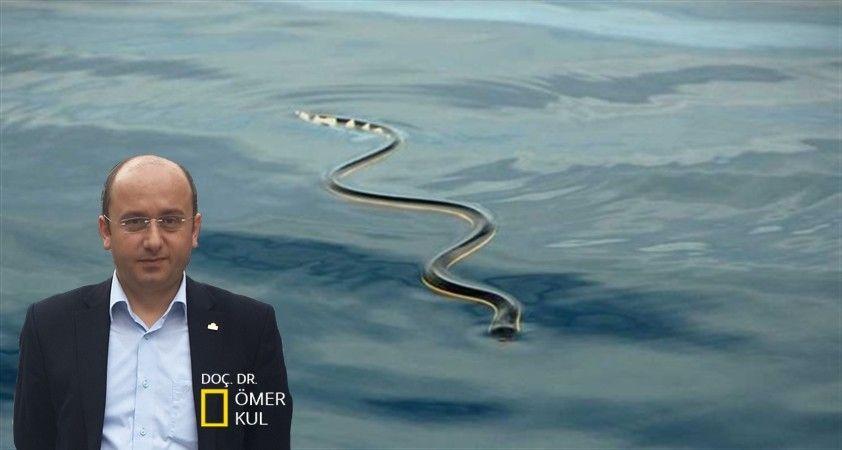 Denize düşen yılana sarılırmış…