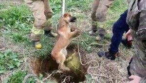 Kuyuya düşen köpeği kurtarma operasyonu kamerada