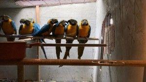 İstanbul'da papağan operasyonu