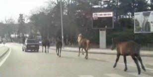 Otomobile bağladığı atları asfaltta metrelerce koşturdu