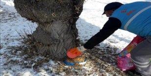 Bayburt'ta sokak hayvanlarına yem bırakıldı
