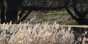 Kırıkkale'de su kuşu sayımı yapıldı