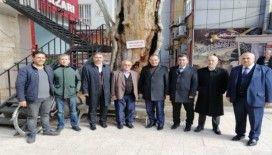 Milletvekili Fırat 400 yıllık anıt ağacı inceledi